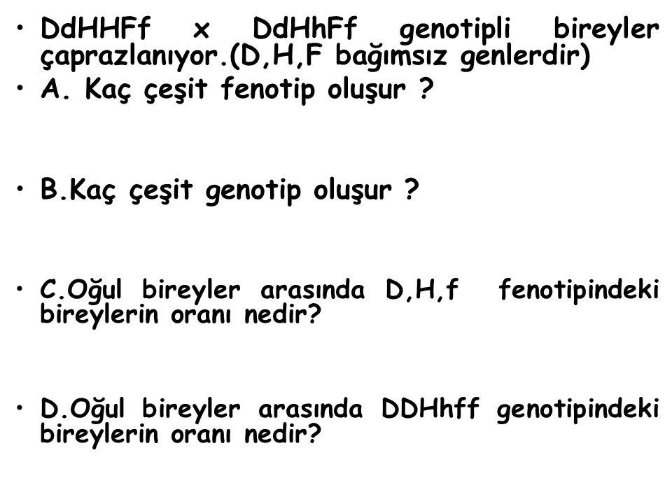 DdHHFf x DdHhFf genotipli bireyler çaprazlanıyor.(D,H,F bağımsız genlerdir) A. Kaç çeşit fenotip oluşur ? B.Kaç çeşit genotip oluşur ? C.Oğul bireyler
