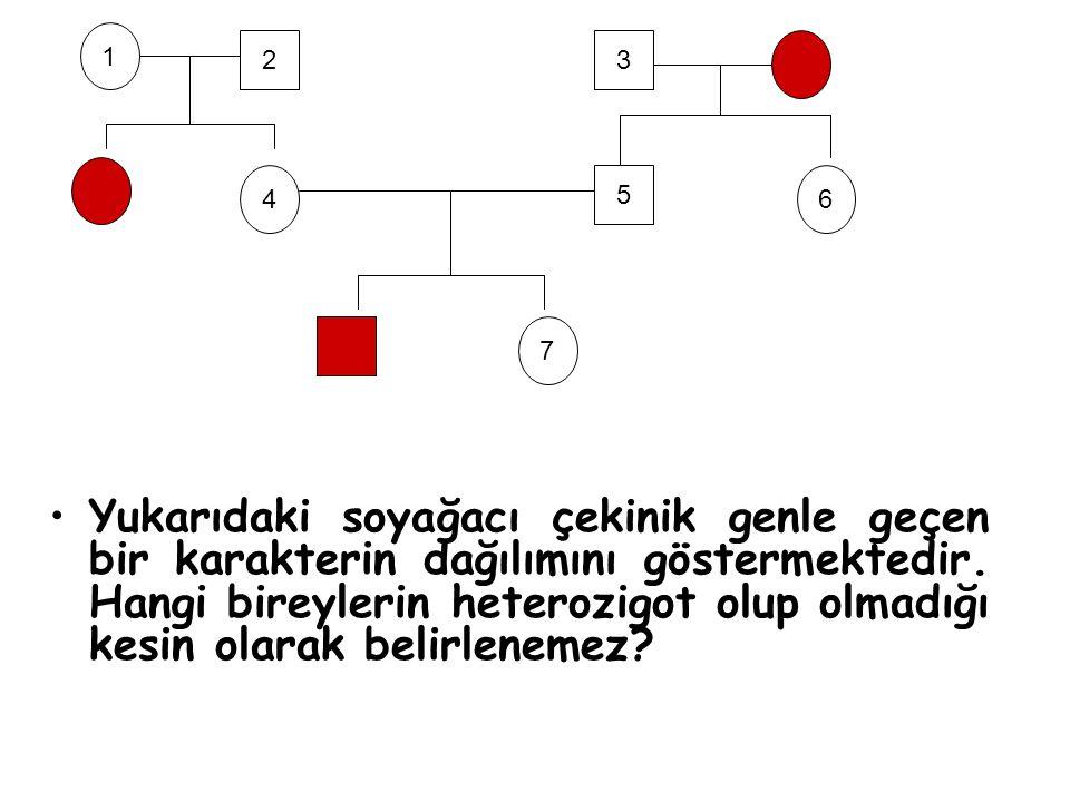 Yukarıdaki soyağacı çekinik genle geçen bir karakterin dağılımını göstermektedir. Hangi bireylerin heterozigot olup olmadığı kesin olarak belirlenemez