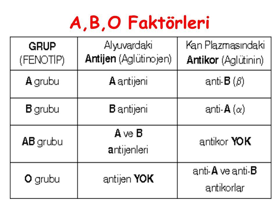 A,B,O Faktörleri