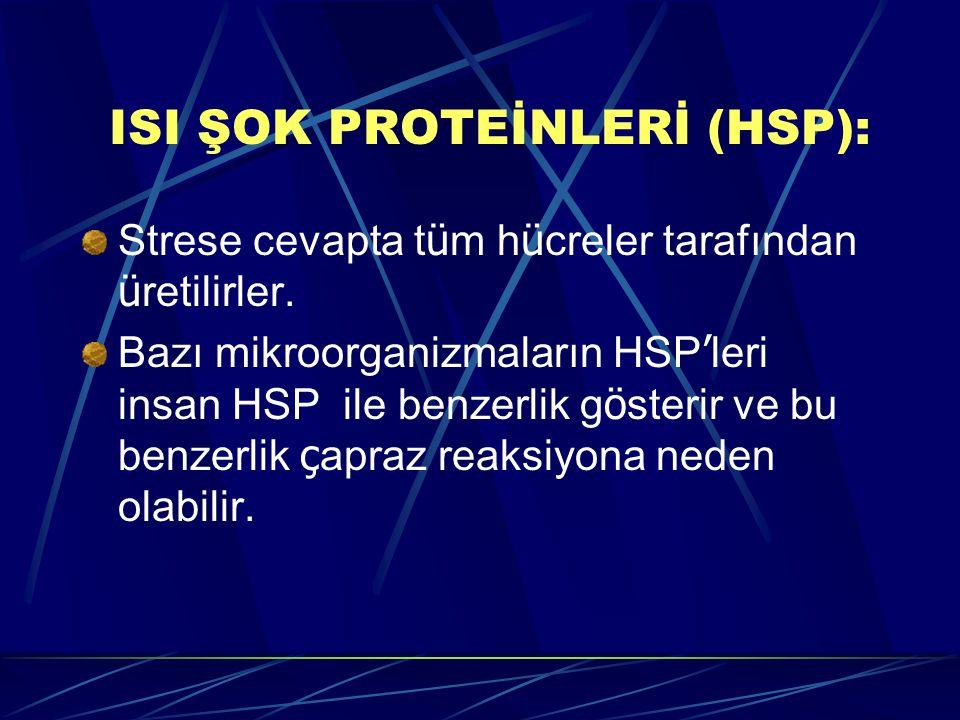 ISI ŞOK PROTEİNLERİ (HSP): Strese cevapta t ü m h ü creler tarafından ü retilirler. Bazı mikroorganizmaların HSP ' leri insan HSP ile benzerlik g ö st