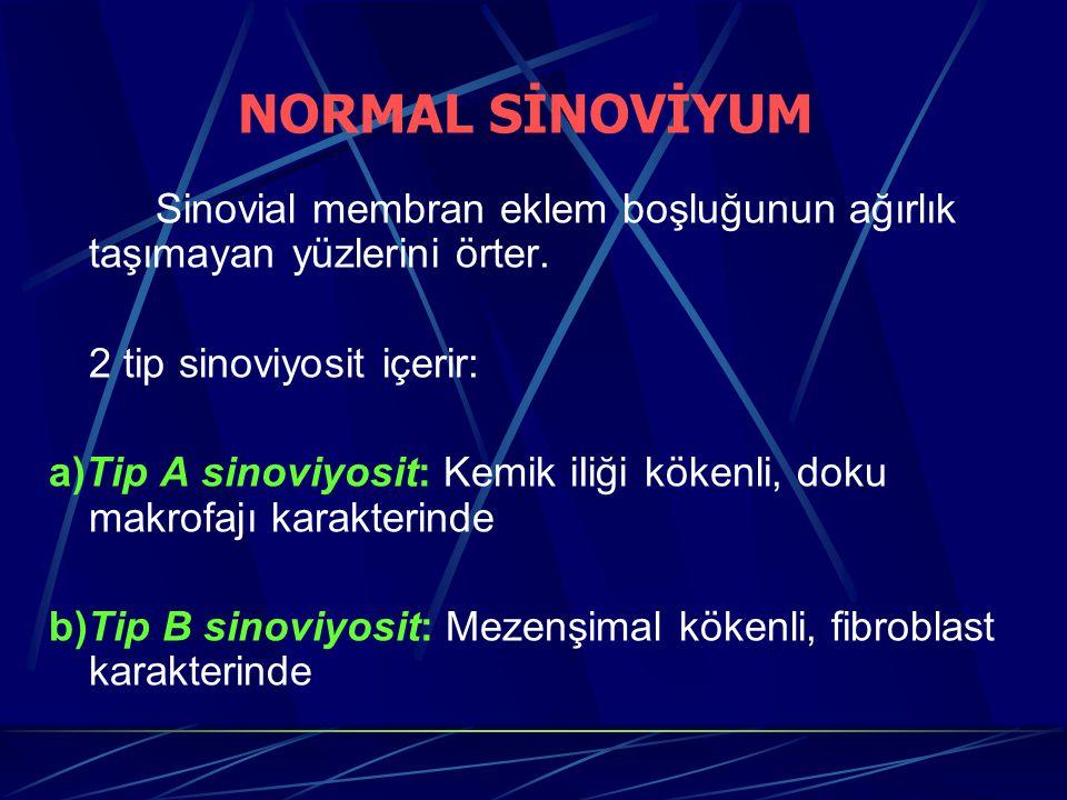 Sinovial membran eklem boşluğunun ağırlık taşımayan yüzlerini örter. 2 tip sinoviyosit içerir: a)Tip A sinoviyosit: Kemik iIiği kökenli, doku makrofaj