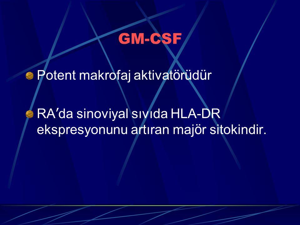 GM-CSF Potent makrofaj aktivat ö r ü d ü r RA ' da sinoviyal sıvıda HLA-DR ekspresyonunu artıran maj ö r sitokindir.