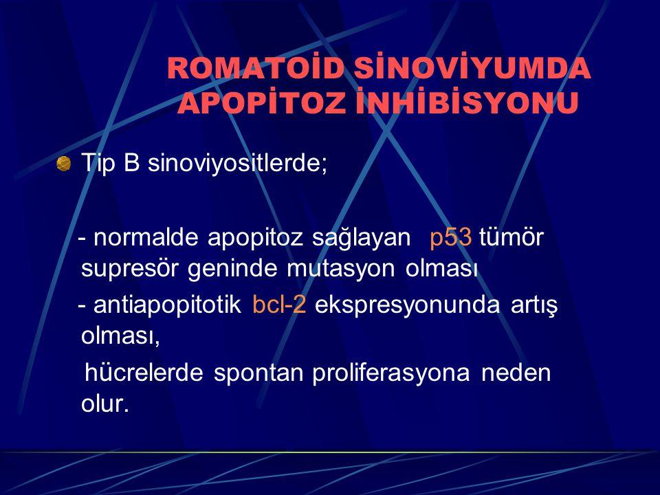ROMATOİD SİNOVİYUMDA APOPİTOZ İNHİBİSYONU Tip B sinoviyositlerde; - normalde apopitoz sağlayan p53 t ü m ö r supres ö r geninde mutasyon olması - antiapopitotik bcl-2 ekspresyonunda artış olması, h ü crelerde spontan proliferasyona neden olur.