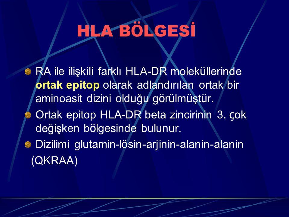 HLA B Ö LGESİ RA ile ilişkili farklı HLA-DR molek ü llerinde ortak epitop olarak adlandırılan ortak bir aminoasit dizini olduğu g ö r ü lm ü şt ü r.