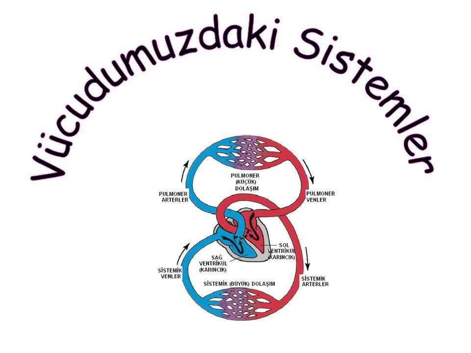 Vücudumuzdaki Sistemler Destek ve Hareket Sistemi Dolaşım SistemiSolunum Sistemi
