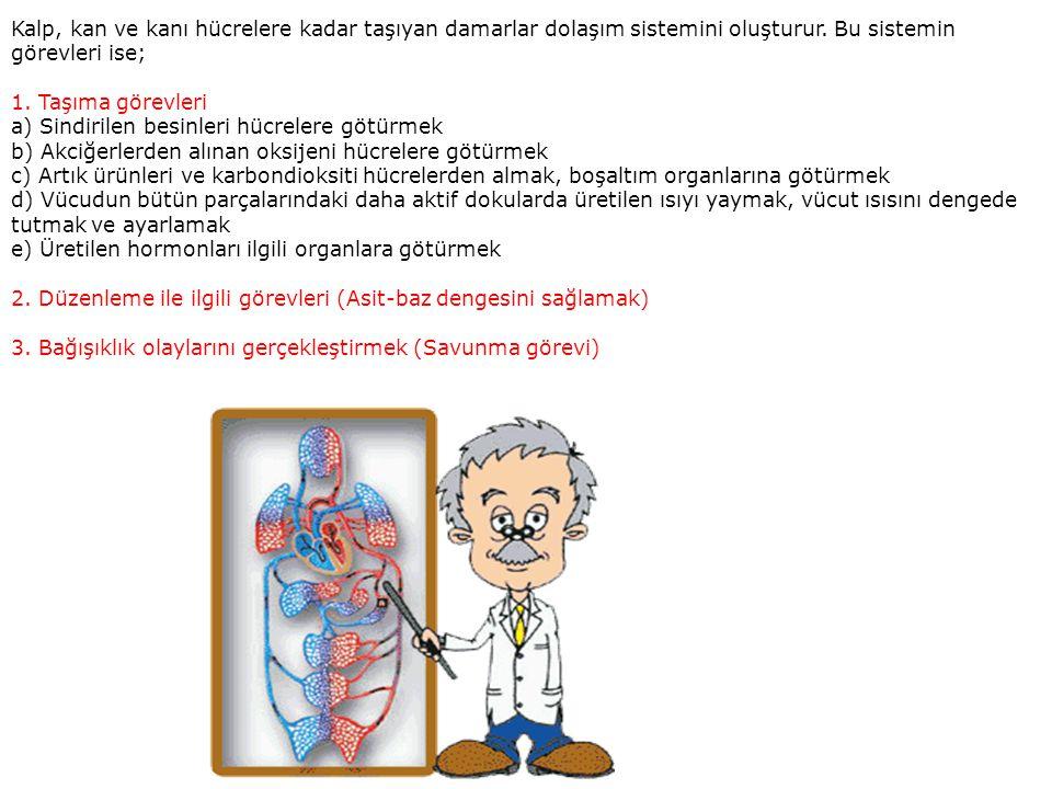 Kalp, kan ve kanı hücrelere kadar taşıyan damarlar dolaşım sistemini oluşturur. Bu sistemin görevleri ise; 1. Taşıma görevleri a) Sindirilen besinleri