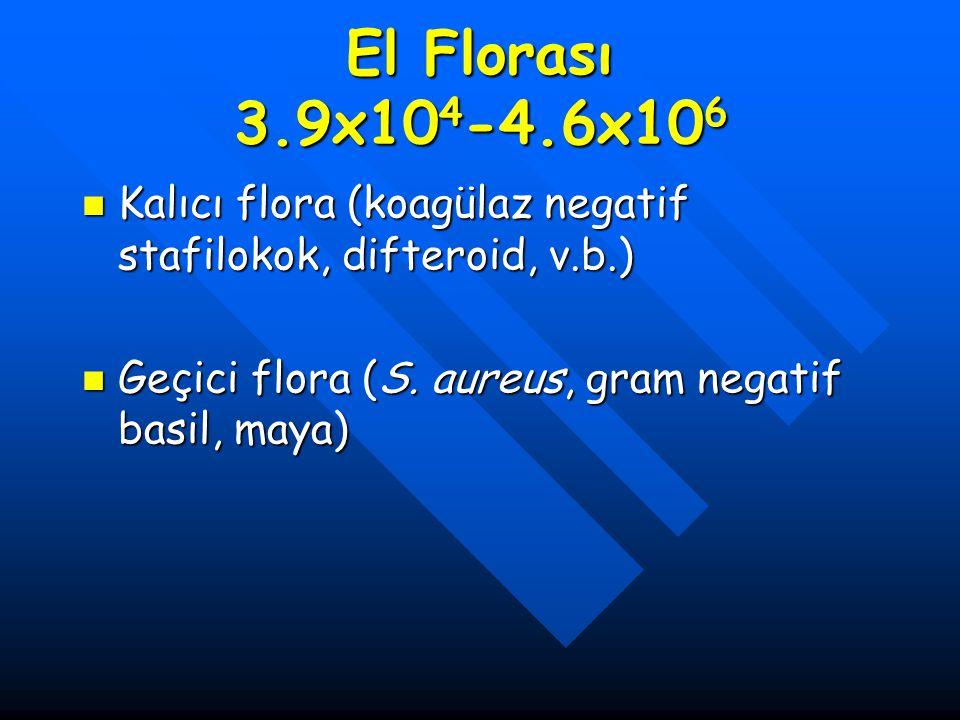 El Florası 3.9x10 4 -4.6x10 6 Kalıcı flora (koagülaz negatif stafilokok, difteroid, v.b.) Kalıcı flora (koagülaz negatif stafilokok, difteroid, v.b.)