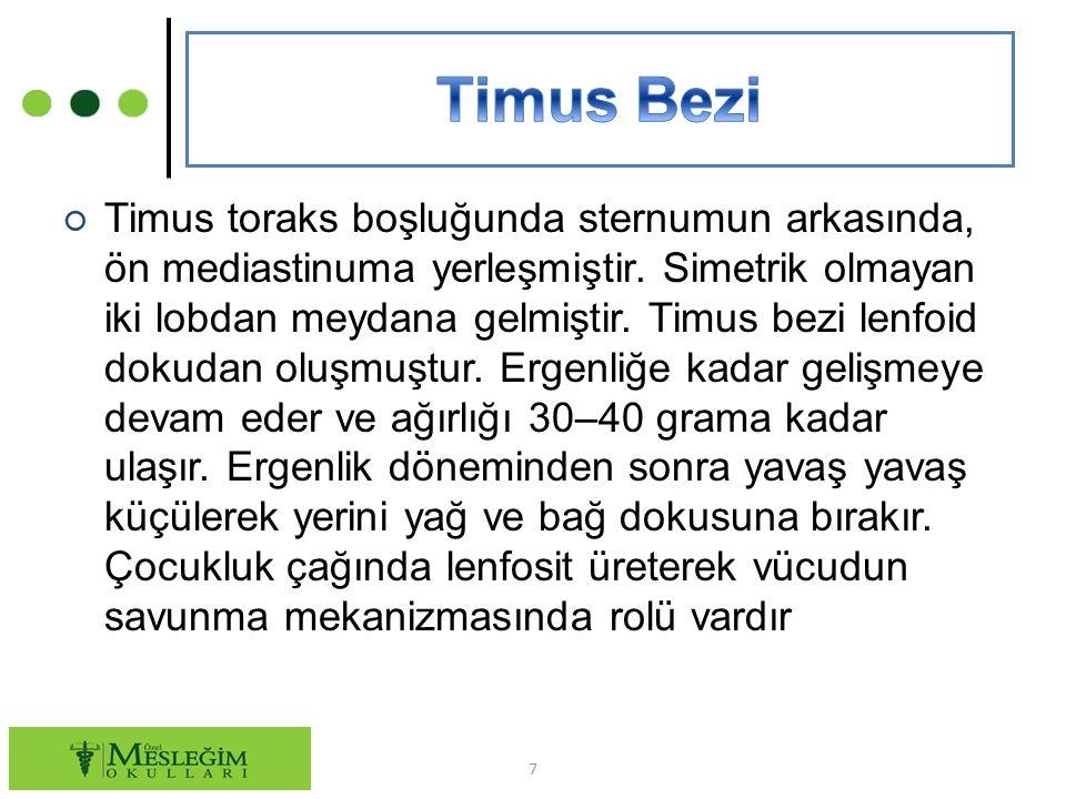 ○ Timus toraks boşluğunda sternumun arkasında, ön mediastinuma yerleşmiştir.