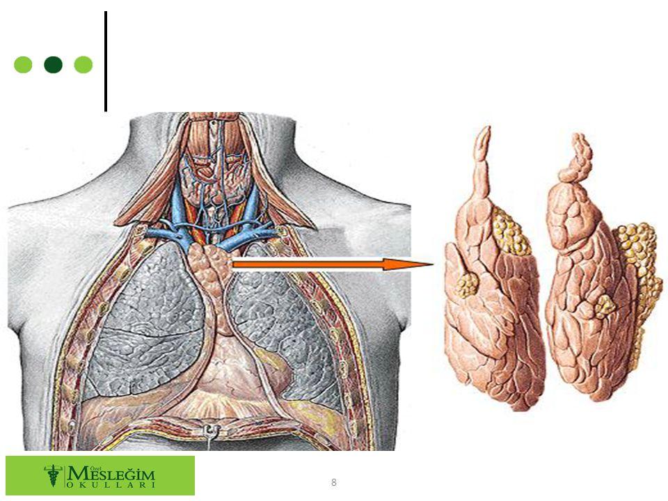 ○ Lenfoid dokudan oluşan dalak, lenf sisteminin en büyük organıdır.