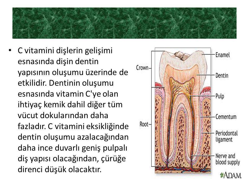 C vitamini dişlerin gelişimi esnasında dişin dentin yapısının oluşumu üzerinde de etkilidir.