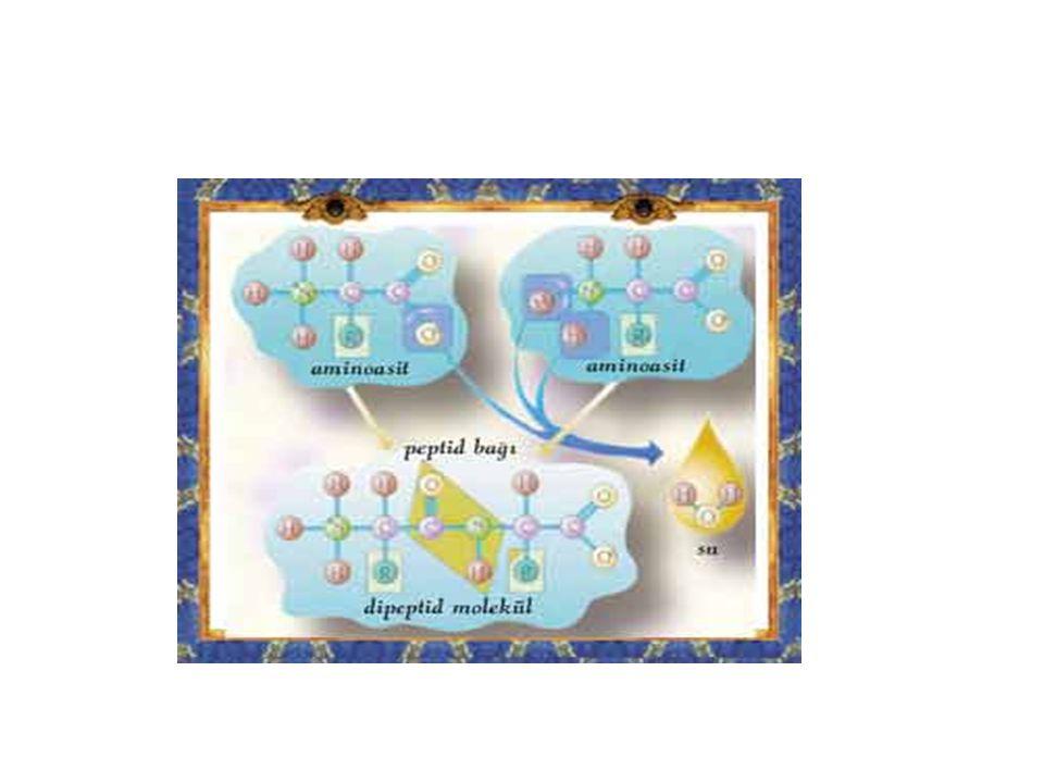 R1 O H R2 O H---N----C---C-----(OH +H)----------N----C----C---OH  Dipeptid + H2O (1 MOL) ' ' H H H YANİ ÖZET OLARAK= Amino asit + amino asit+…………………+amino asit  protein + n-1 su n( amino asit) in birleşmesiyle proteinler oluşur burda n sayısı 1000 lerce olur.