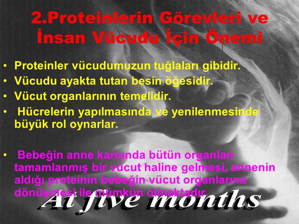 2.Proteinlerin Görevleri ve İnsan Vücudu İçin Önemi Proteinler vücudumuzun tuğlaları gibidir. Vücudu ayakta tutan besin öğesidir. Vücut organlarının t