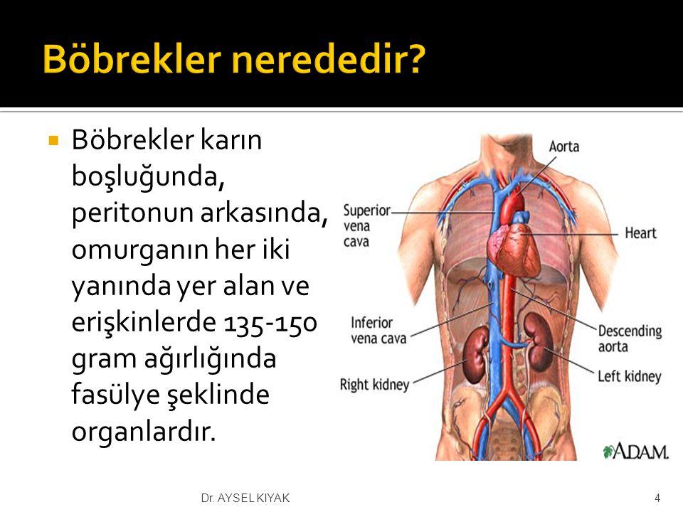  Periton diyalizi  Sürekli ayaktan periton diyalizi (SAPD)  Aletli periton diyalizi (APD)  Hemodiyaliz  Böbrek nakli (transplantasyon)  Canlı  Kadavra 25Dr.