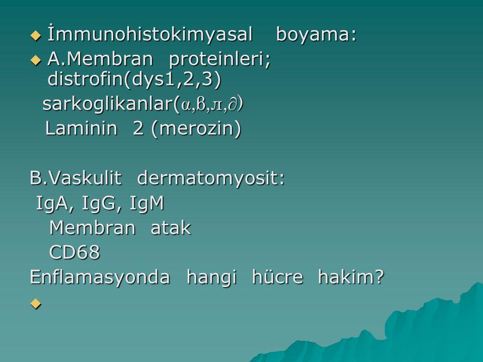  İmmunohistokimyasal boyama:  A.Membran proteinleri; distrofin(dys1,2,3) sarkoglikanlar( ,β,л,∂) sarkoglikanlar( ,β,л,∂) Laminin 2 (merozin) Lamin