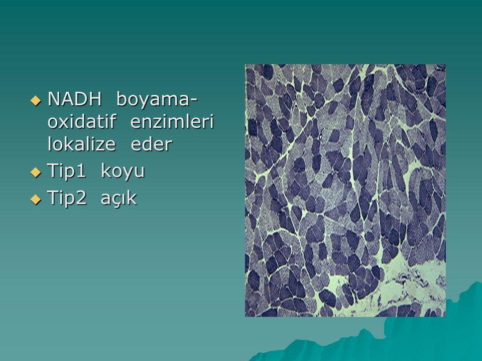  NADH boyama- oxidatif enzimleri lokalize eder  Tip1 koyu  Tip2 açık