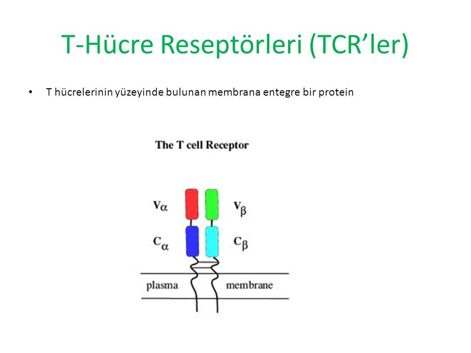 T-Hücre Reseptörleri (TCR'ler) T hücrelerinin yüzeyinde bulunan membrana entegre bir protein