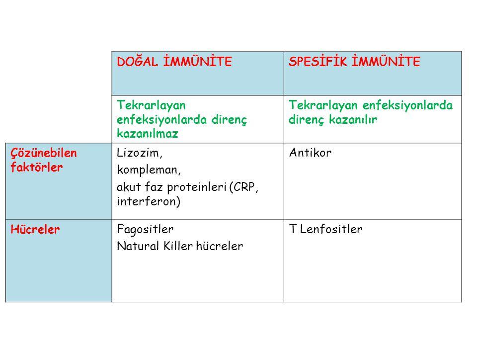 α zincirde ; yaklaşık 80 değişken (V) gen 61 birleştirici (J) segment β zincirde ; yaklaşık 50 değişken (V) gen 2 çeşitlilik (D) geni 13 birleştirici (J) segment