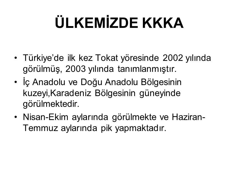 ÜLKEMİZDE KKKA Türkiye'de ilk kez Tokat yöresinde 2002 yılında görülmüş, 2003 yılında tanımlanmıştır.