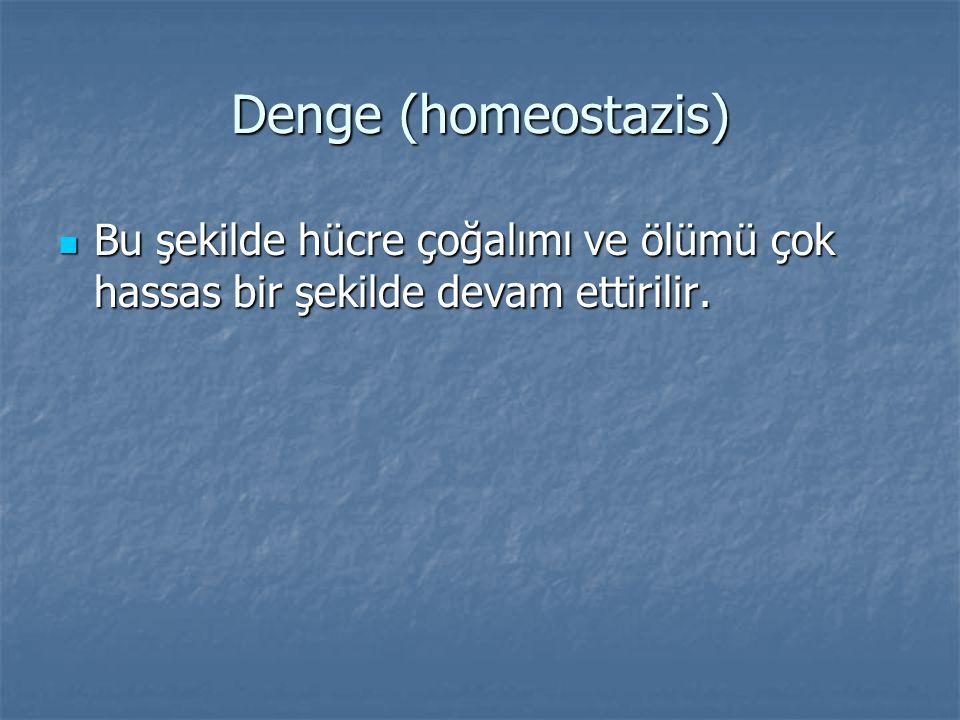 Denge (homeostazis) Bu şekilde hücre çoğalımı ve ölümü çok hassas bir şekilde devam ettirilir. Bu şekilde hücre çoğalımı ve ölümü çok hassas bir şekil