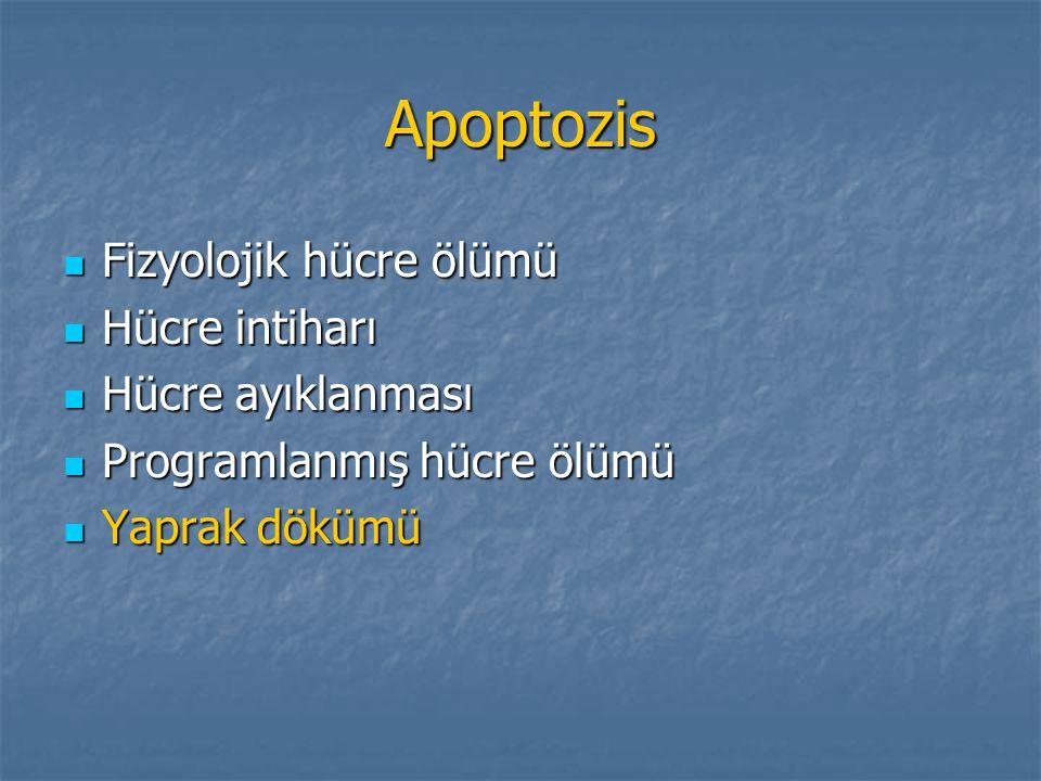 Apoptozis Fizyolojik hücre ölümü Fizyolojik hücre ölümü Hücre intiharı Hücre intiharı Hücre ayıklanması Hücre ayıklanması Programlanmış hücre ölümü Pr