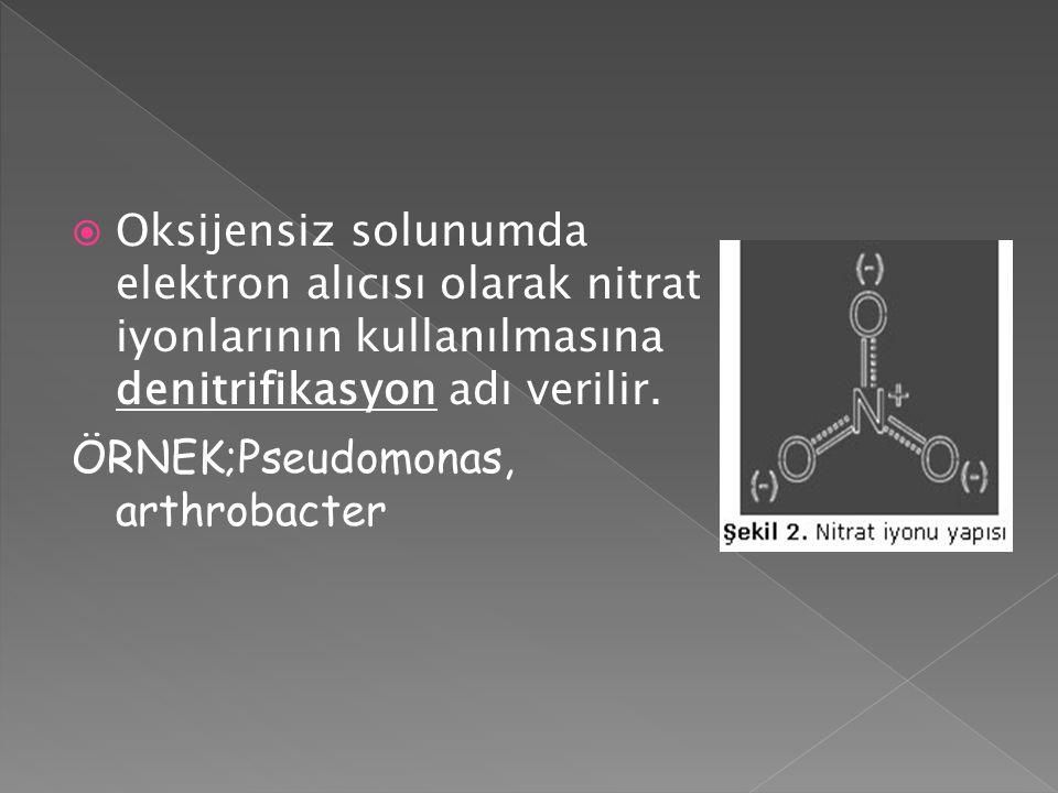  Oksijensiz solunumda elektron alıcısı olarak nitrat iyonlarının kullanılmasına denitrifikasyon adı verilir. ÖRNEK;Pseudomonas, arthrobacter