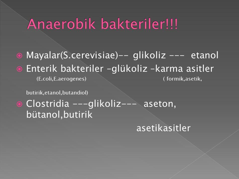  Mayalar(S.cerevisiae)-- glikoliz --- etanol  Enterik bakteriler –glükoliz –karma asitler (E.coli,E.aerogenes) ( formik,asetik, butirik,etanol,butan