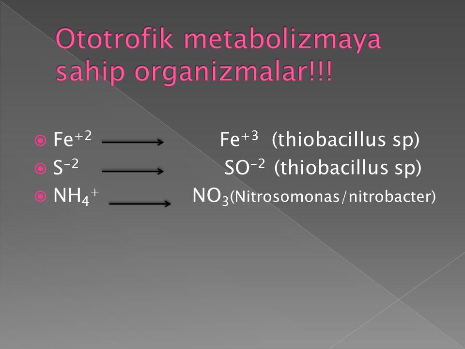  Fe +2 Fe +3 (thiobacillus sp)  S -2 SO -2 (thiobacillus sp)  NH 4 + NO 3 (Nitrosomonas/nitrobacter)