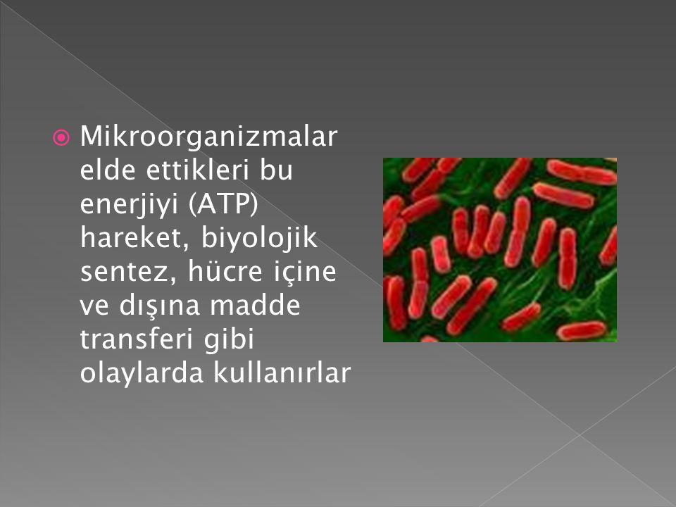  Mikroorganizmalar elde ettikleri bu enerjiyi (ATP) hareket, biyolojik sentez, hücre içine ve dışına madde transferi gibi olaylarda kullanırlar