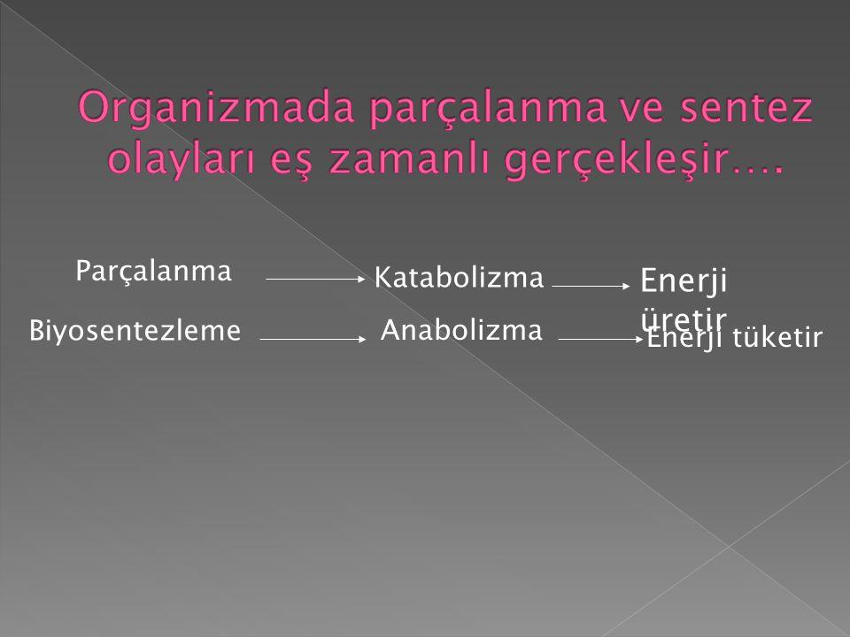 Parçalanma Katabolizma Enerji üretir Biyosentezleme Anabolizma Enerji tüketir