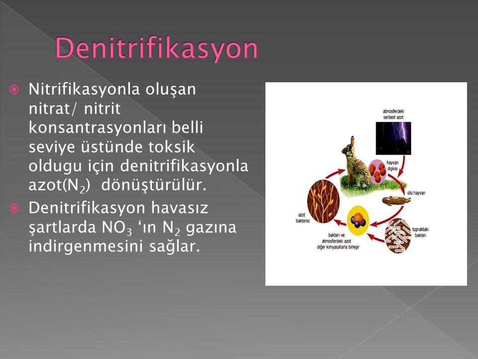  Nitrifikasyonla oluşan nitrat/ nitrit konsantrasyonları belli seviye üstünde toksik oldugu için denitrifikasyonla azot(N 2 ) dönüştürülür.  Denitri
