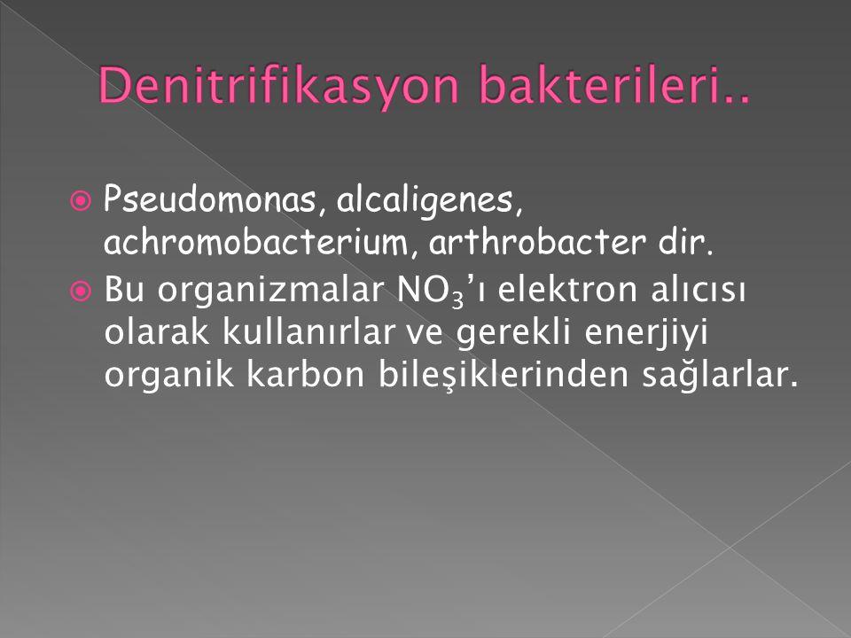  Pseudomonas, alcaligenes, achromobacterium, arthrobacter dir.  Bu organizmalar NO 3 'ı elektron alıcısı olarak kullanırlar ve gerekli enerjiyi orga