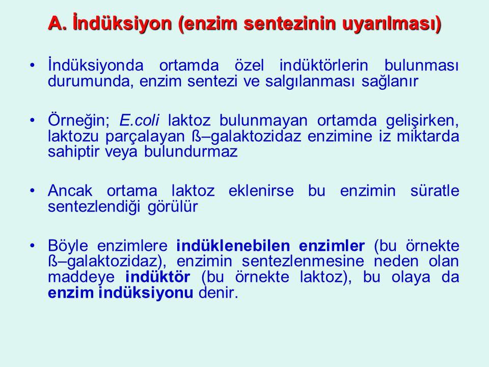 A. İndüksiyon (enzim sentezinin uyarılması) İndüksiyonda ortamda özel indüktörlerin bulunması durumunda, enzim sentezi ve salgılanması sağlanır Örneği