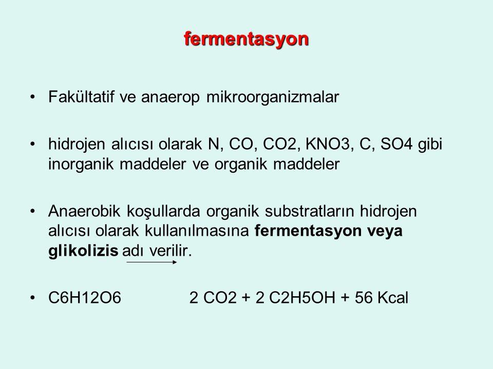 fermentasyon Fakültatif ve anaerop mikroorganizmalar hidrojen alıcısı olarak N, CO, CO2, KNO3, C, SO4 gibi inorganik maddeler ve organik maddeler Anae