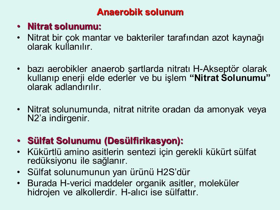 Anaerobik solunum Nitrat solunumu:Nitrat solunumu: Nitrat bir çok mantar ve bakteriler tarafından azot kaynağı olarak kullanılır. bazı aerobikler anae