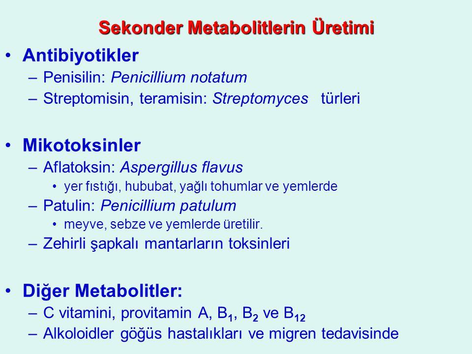 Sekonder Metabolitlerin Üretimi Antibiyotikler –Penisilin: Penicillium notatum –Streptomisin, teramisin: Streptomyces türleri Mikotoksinler –Aflatoksi