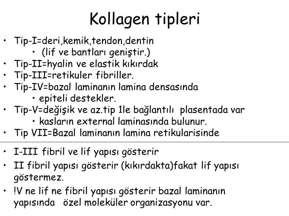 Kollagen tipleri Tip-I=deri,kemik,tendon,dentin (lif ve bantları geniştir.) Tip-II=hyalin ve elastik kıkırdak Tip-III=retikuler fibriller. Tip-IV=baza