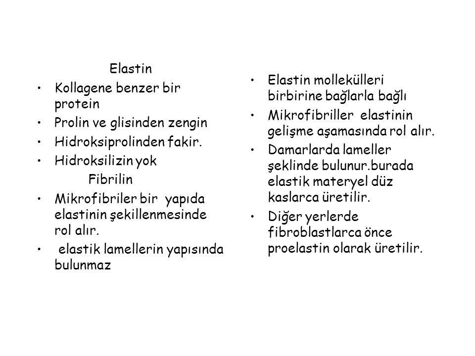 Elastin Kollagene benzer bir protein Prolin ve glisinden zengin Hidroksiprolinden fakir. Hidroksilizin yok Fibrilin Mikrofibriler bir yapıda elastinin