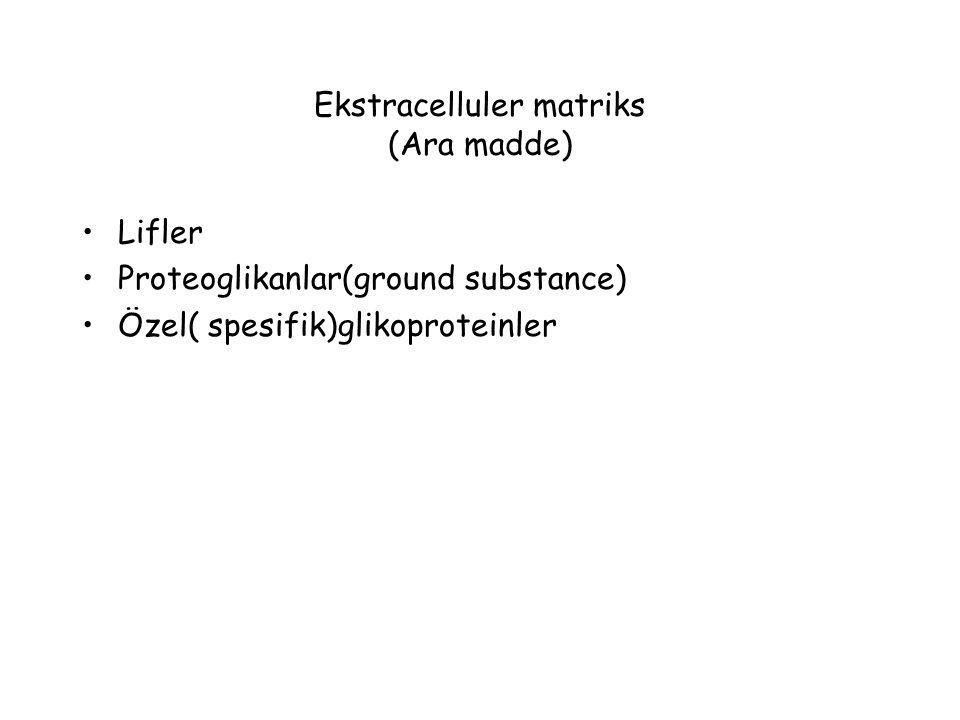 Ekstracelluler matriks (Ara madde) Lifler Proteoglikanlar(ground substance) Özel( spesifik)glikoproteinler