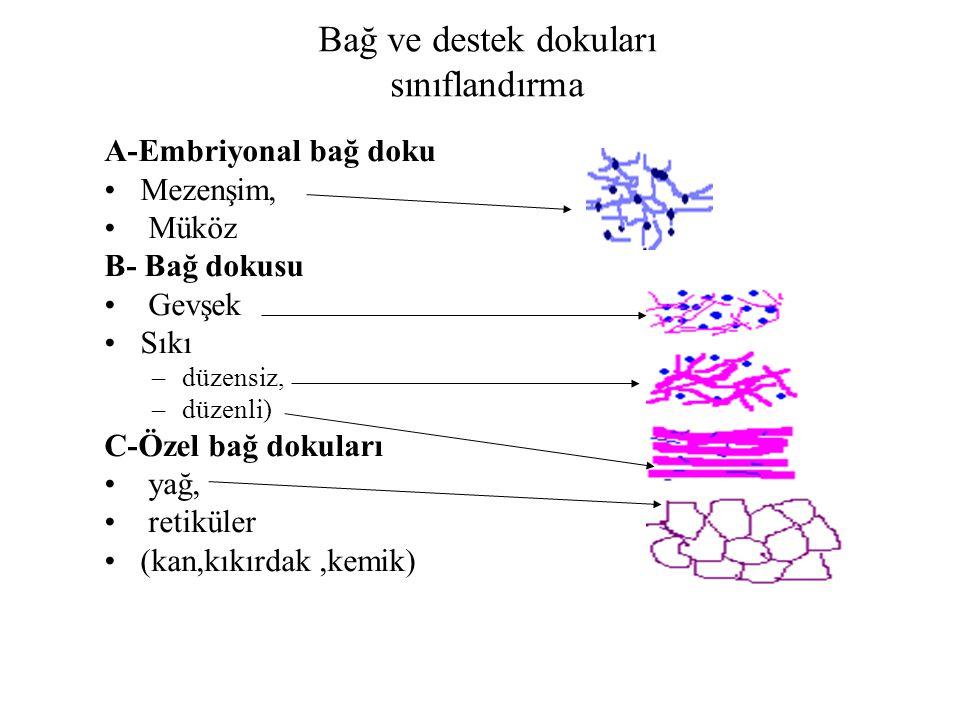 Bağ ve destek dokuları sınıflandırma A-Embriyonal bağ doku Mezenşim, Müköz B- Bağ dokusu Gevşek Sıkı –düzensiz, –düzenli) C-Özel bağ dokuları yağ, ret