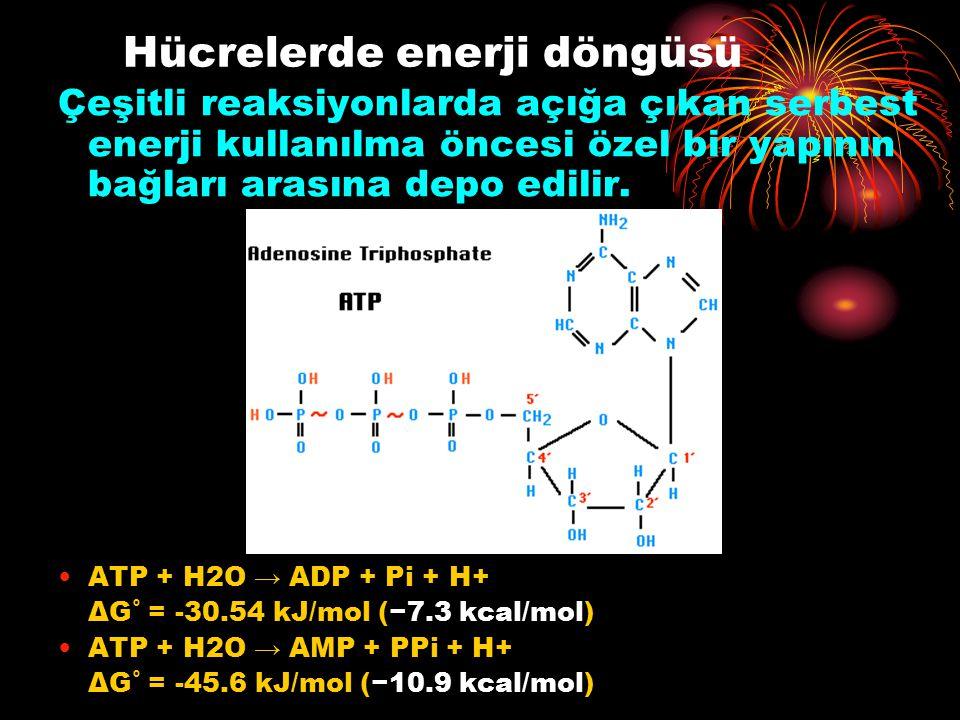 Hücrelerde enerji döngüsü Çeşitli reaksiyonlarda açığa çıkan serbest enerji kullanılma öncesi özel bir yapının bağları arasına depo edilir. ATP + H2O