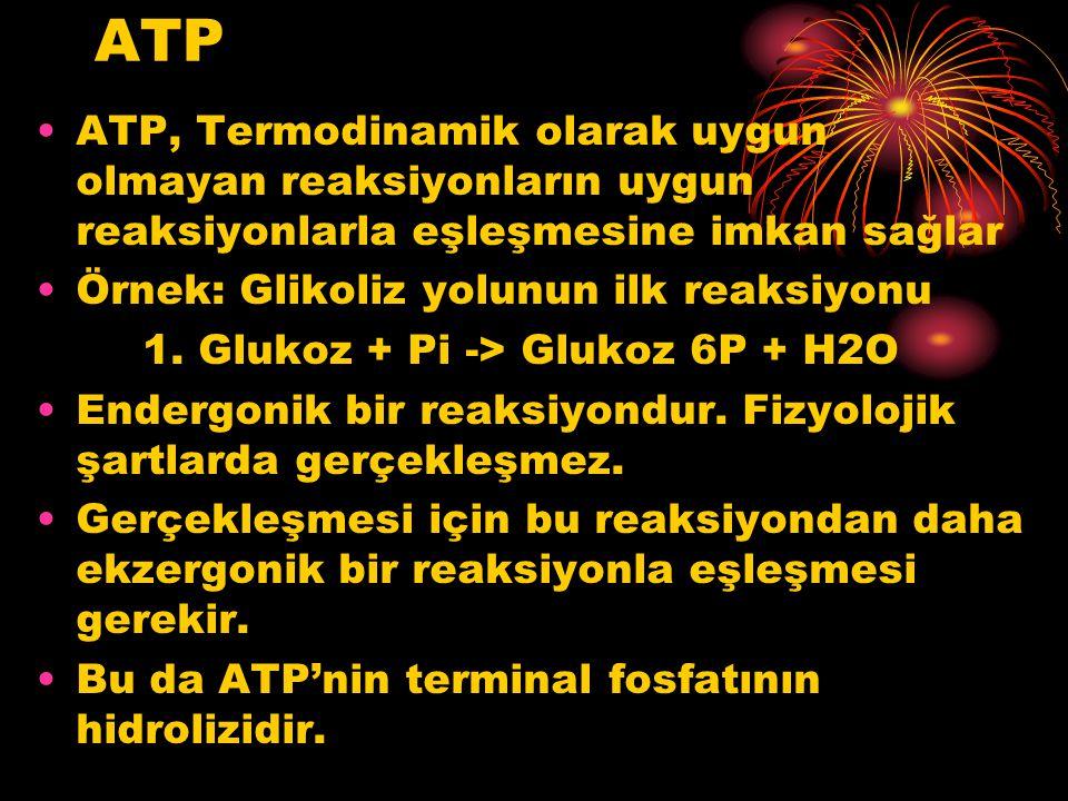 ATP ATP, Termodinamik olarak uygun olmayan reaksiyonların uygun reaksiyonlarla eşleşmesine imkan sağlar Örnek: Glikoliz yolunun ilk reaksiyonu 1. Gluk
