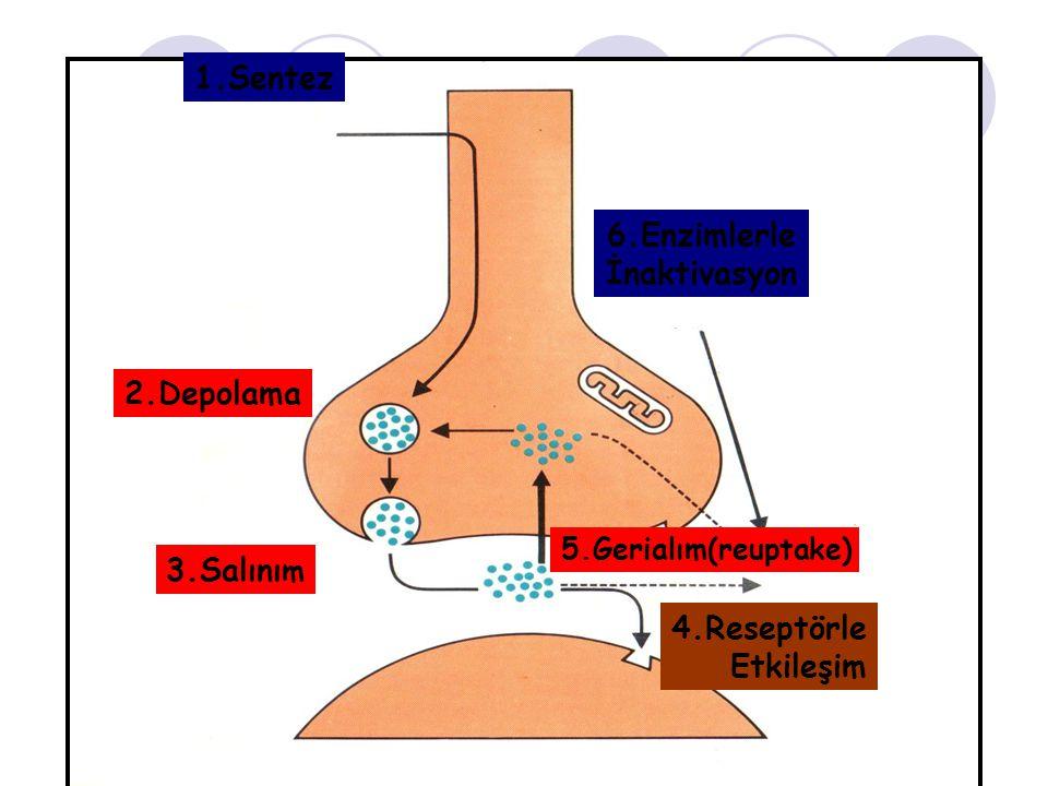 1.Sentez 2.Depolama 3.Salını m 6.Enzimlerle İnaktivasyon 4.Reseptörle Etkileşim 5.Gerialım(reuptake)