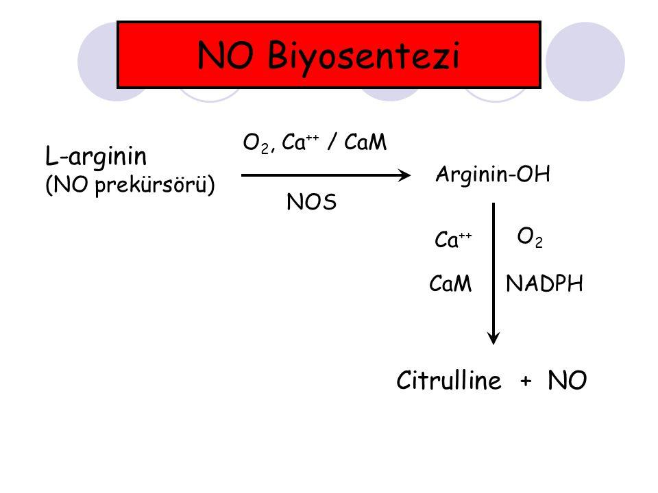 NO Biyosentezi L-arginin (NO prekürsörü) O 2, Ca ++ / CaM Arginin-OH Ca ++ CaM O2O2 NADPH Citrulline + NO NOS
