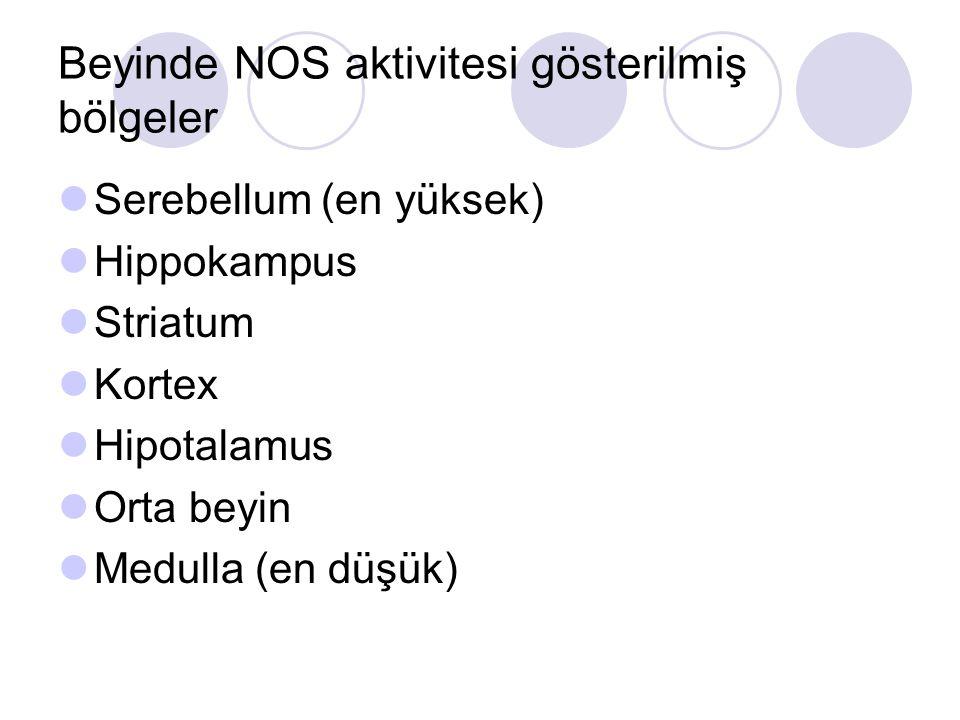 Beyinde NOS aktivitesi gösterilmiş bölgeler Serebellum (en yüksek) Hippokampus Striatum Kortex Hipotalamus Orta beyin Medulla (en düşük)