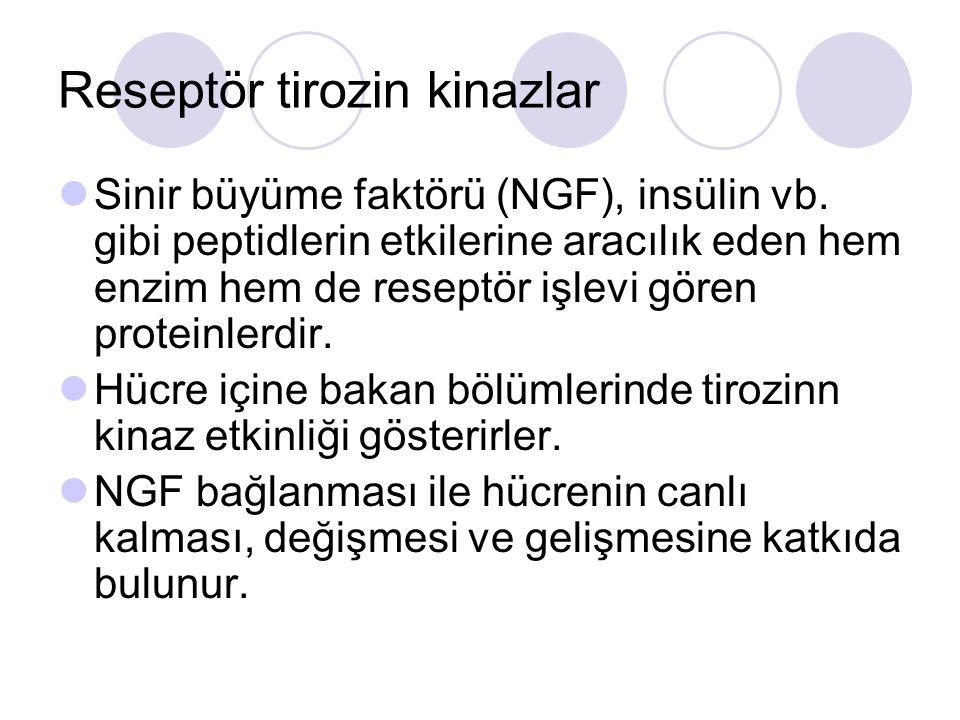 Reseptör tirozin kinazlar Sinir büyüme faktörü (NGF), insülin vb. gibi peptidlerin etkilerine aracılık eden hem enzim hem de reseptör işlevi gören pro