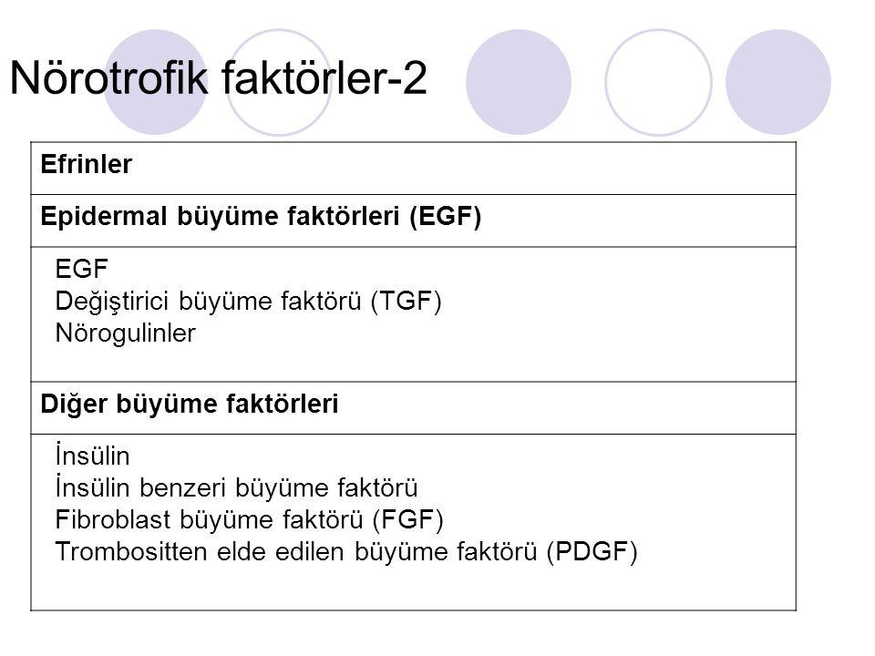 Nörotrofik faktörler-2 Efrinler Epidermal büyüme faktörleri (EGF) EGF Değiştirici büyüme faktörü (TGF) Nörogulinler Diğer büyüme faktörleri İnsülin İn