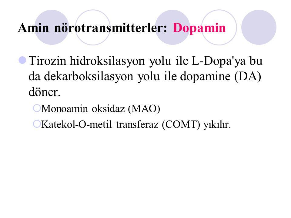 Amin nörotransmitterler: Dopamin Tirozin hidroksilasyon yolu ile L-Dopa'ya bu da dekarboksilasyon yolu ile dopamine (DA) döner.  Monoamin oksidaz (MA
