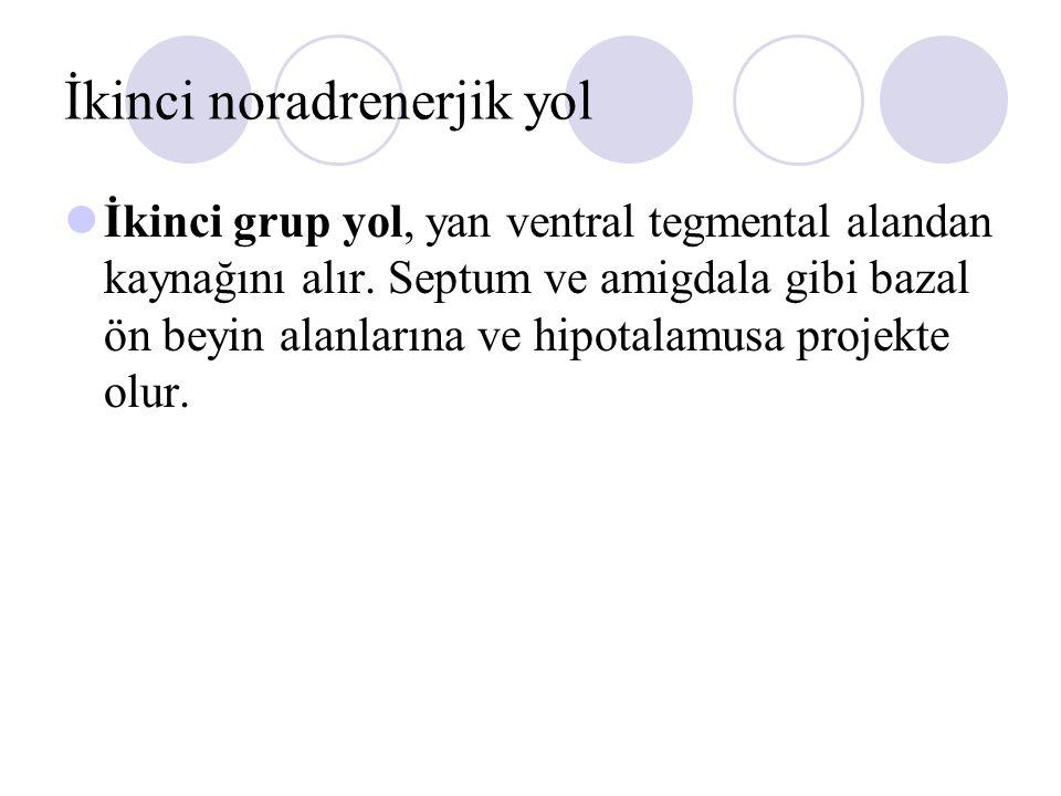 İkinci noradrenerjik yol İkinci grup yol, yan ventral tegmental alandan kaynağını alır. Septum ve amigdala gibi bazal ön beyin alanlarına ve hipotalam