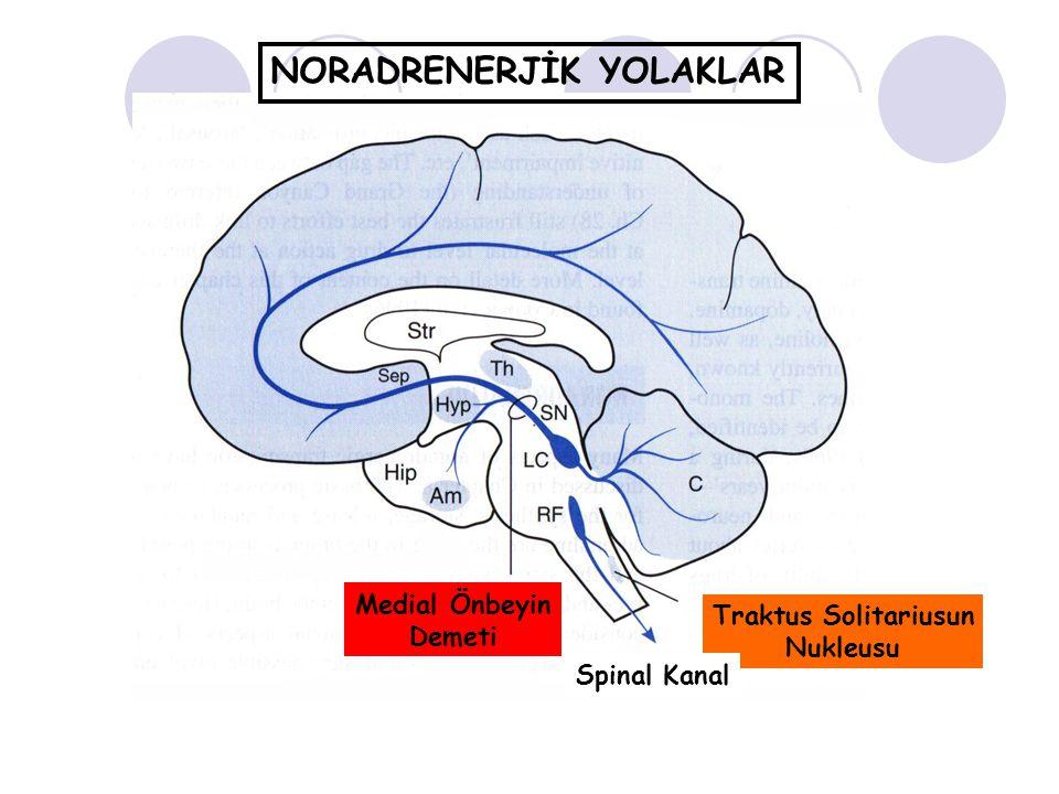 NORADRENERJİK YOLAKLAR Medial Önbeyin Demeti Traktus Solitariusun Nukleusu Spinal Kanal