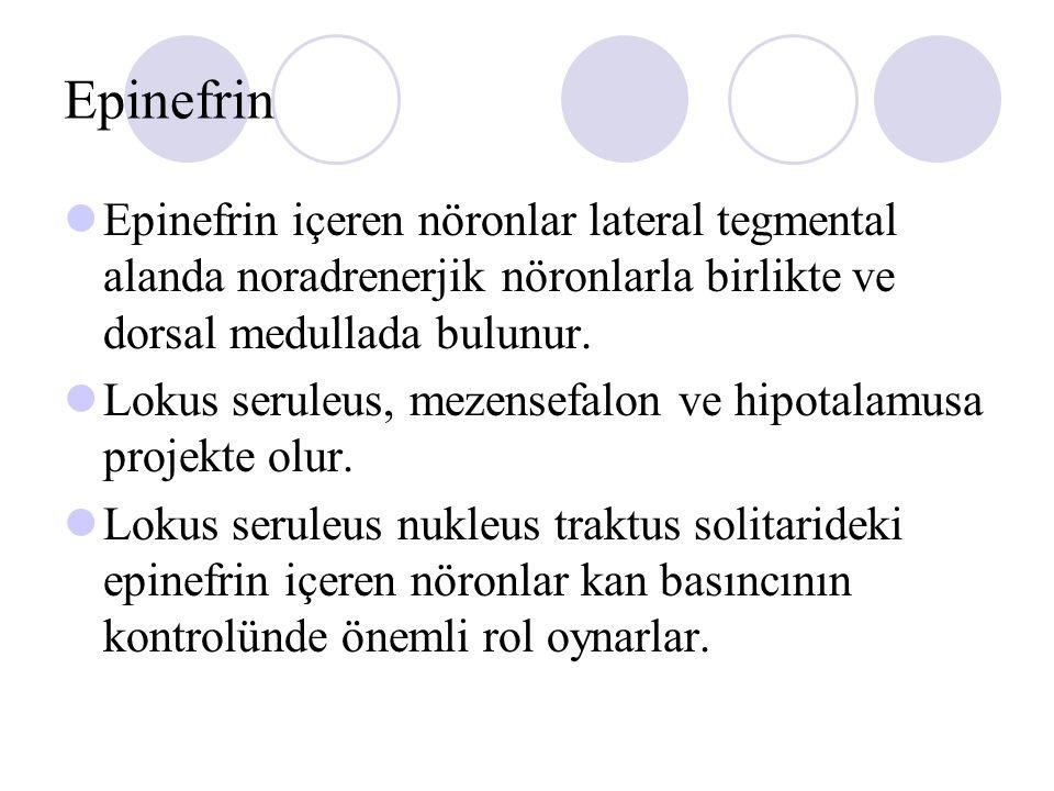 Epinefrin Epinefrin içeren nöronlar lateral tegmental alanda noradrenerjik nöronlarla birlikte ve dorsal medullada bulunur. Lokus seruleus, mezensefal